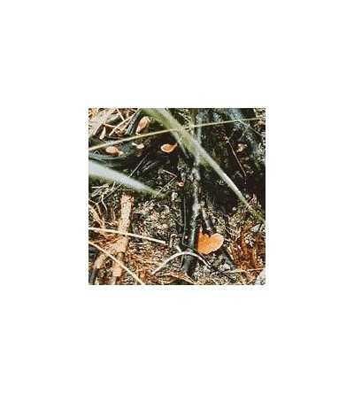20. Amazon Mushroom No. 2- 15 ml.