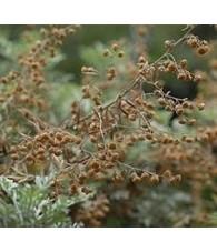 Artemisia 10 ml.
