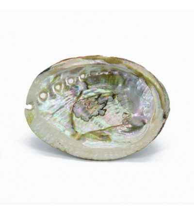 Shell of Avalon