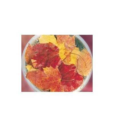 Autumn Leaves 15 ml.
