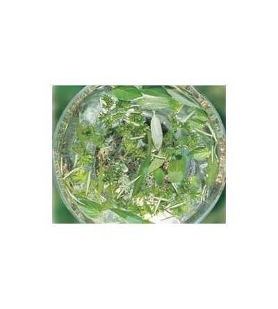 Green Essence 15 ml.
