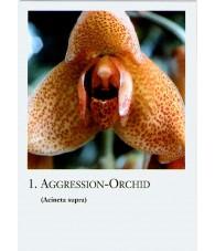 Cartas Orquideas Amazonas -...