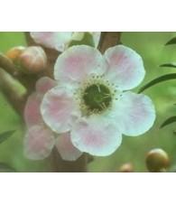 Peach Flowered Tea Tree 15 ml.