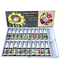 Kit Cactus 15 ml.