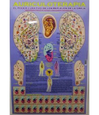 Poster Auriculoterapia...