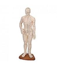 Cuerpo Humano Femenino