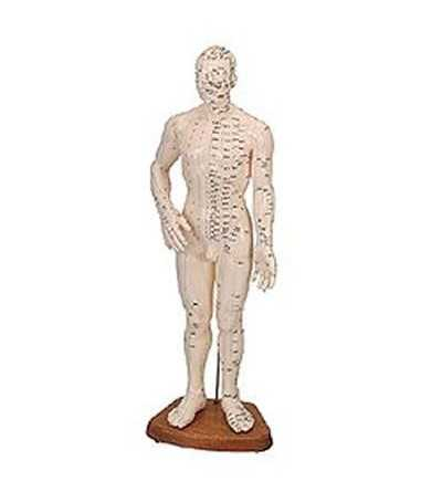 Cuerpo Humano Masculino