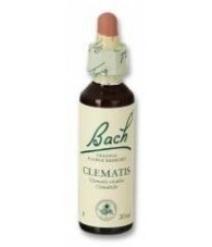 Clematis 20 ml