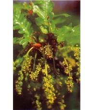 Oak 10-30 ml.