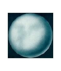 Venus 15 ml.