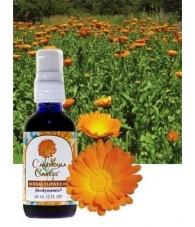 Calendula Oil 60 ml.