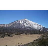 Teide-Volcan Essence
