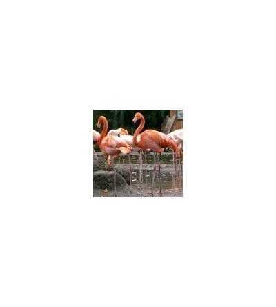 Flamingo Essence 15 ml