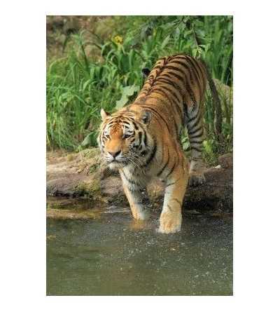 Esencia de Tigre 15 ml