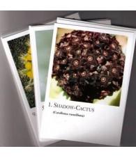 Cartas Cactus - Korte
