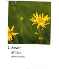 Cartas Flores Silvestres - Korte
