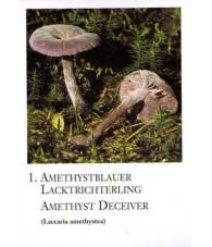 Mushroom Energy Essences Cards - Korte