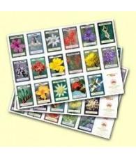 Australian Bush Flower Essence Poster