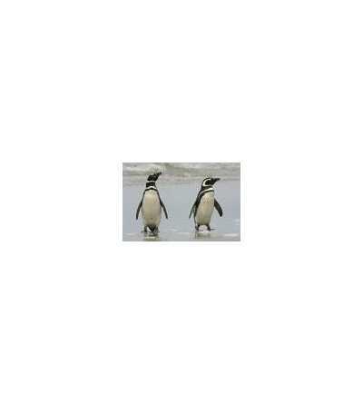 Esencia de Pinguino 15 ml