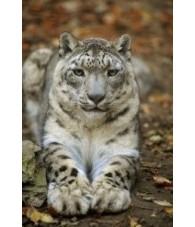 Esencia de Leopardo de las Nieves 15 ml