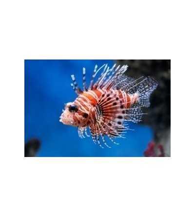 Esencia de Coral de Cuero 15 ml