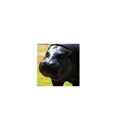 Flusspferd - Hippopotamus 15 ml
