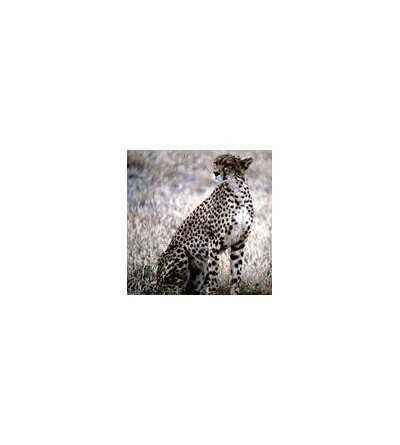 Leopard Essence 15 ml