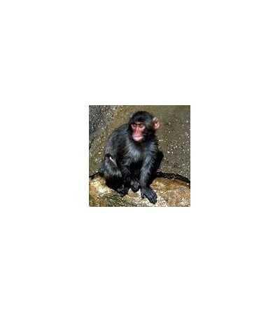 Monkey Essence 15 ml