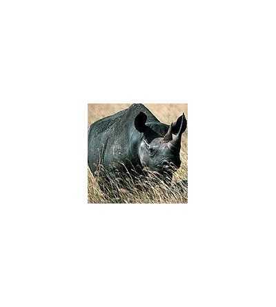 Esencia de Rinoceronte 15 ml