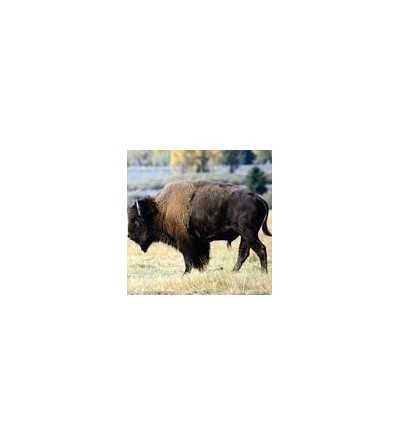 Bison Essence 15 ml.