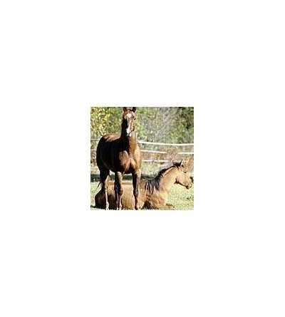 Horse Essence 15 ml.