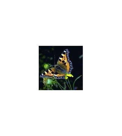 Esencia de Mariposa 15 ml.