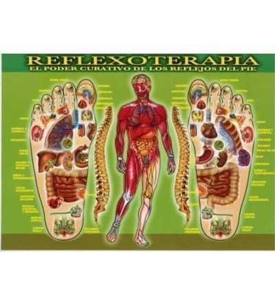 Lámina Reflexologia