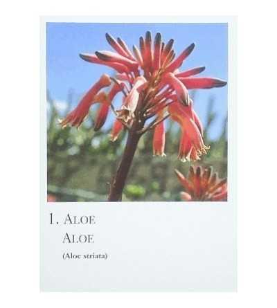 Cartas de Plantas Silvestres Africanas - Canarias