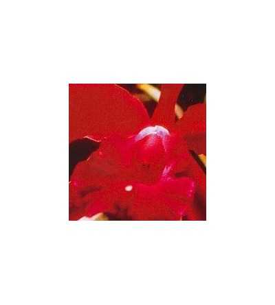 Heart-Orchid 15 ml.