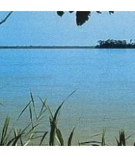 Orquidea Amazonas 15 ml.