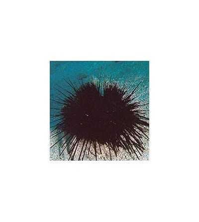 Sea Urchin Essence 15 ml.