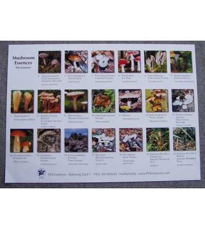 Poster Orquideas Amazonas Korte