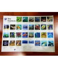Poster Esencias del Mar Korte