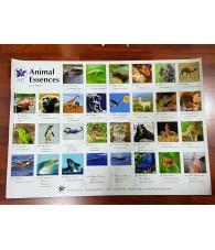 Poster Orquiodeas Amazonas