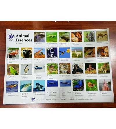 Poster Animales Africanos Korte