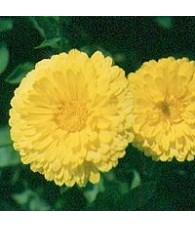 Pot-Marigold 15 ml.