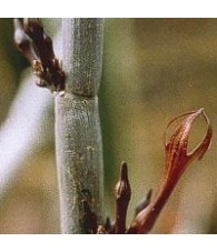 03. Release cactus 15 ml.