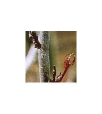 03. Cactus Liberación 15 ml.