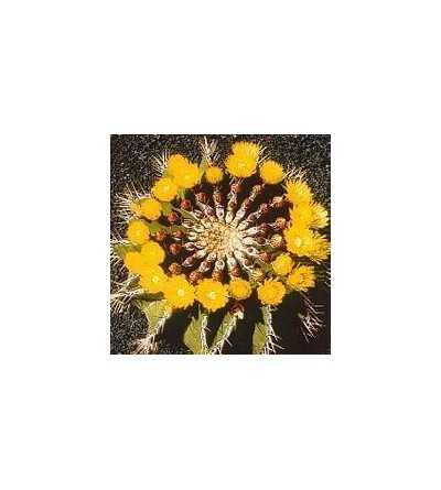 09. Cactus Autoestima 15 ml.