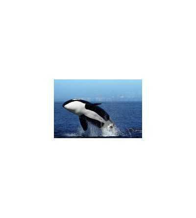Esencia de Orca 15 ml.
