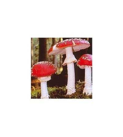 04. Fly Agaric 15 ml.