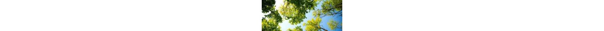 COMBINATIONS - MULTI FLOWER